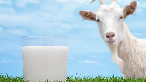 ลูกแพ้นมวัว-อาการเด็กแพ้นมวัวดื่มนมแพะแทนได้ไหม?