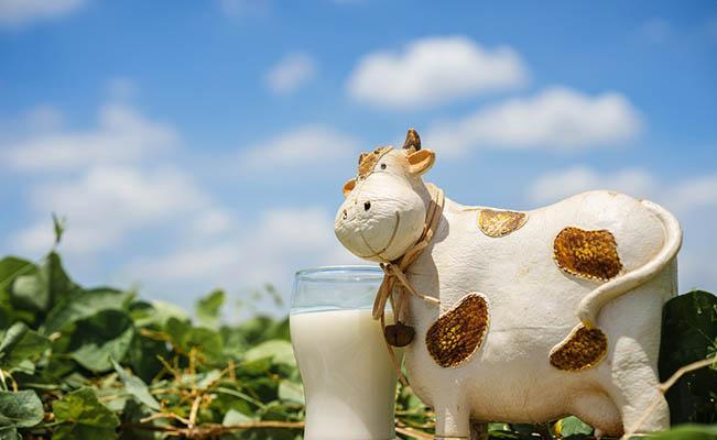 การแพ้โปรตีนนมวัว เกิดจากอะไร